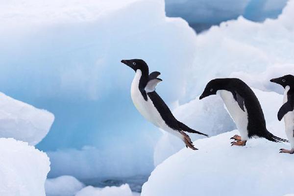 ===Que es para ti volar?...=== Pinguino1